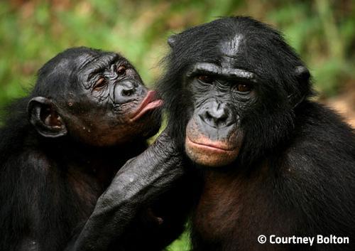 7 Most Romantic Animals   Planetwildlife: Nature, Adventure, Offbeat