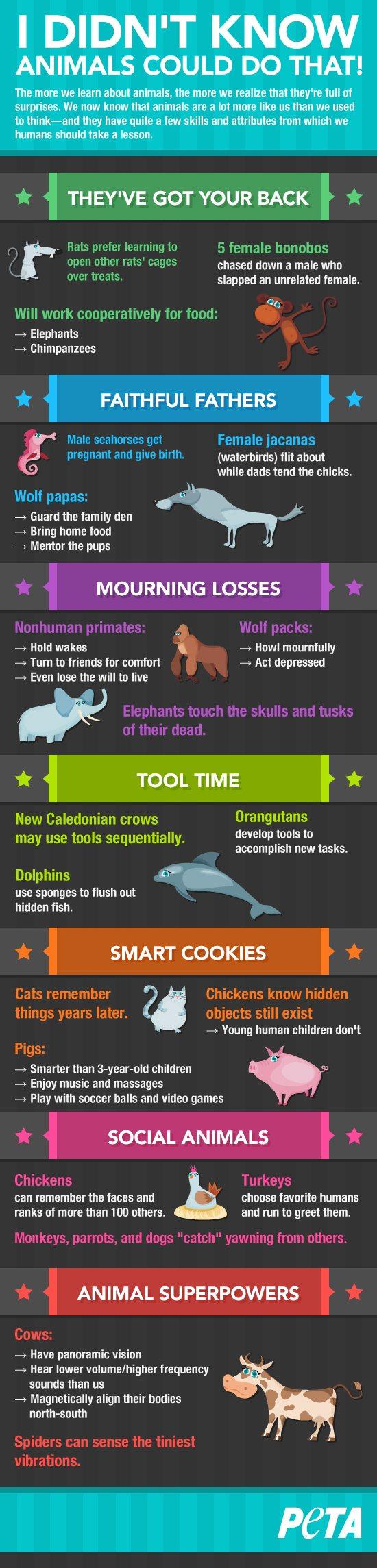 skunk amazing facts